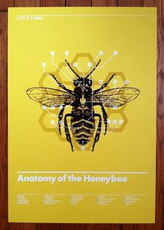 Anatomy of the Honeybee: Modern Nature Study: Little Tybee poster by Mark Weaver