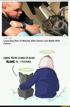 Loyal Dog Dies 15 Minutes After Owner Lost Battle With Cancer I mow vou'ae scam or sema - iFunny :) Sweet Stories, Cute Stories, Sad Comics, Funny Comics, Stupid Funny Memes, Funny Relatable Memes, Funny Texts, Touching Stories, Faith In Humanity Restored