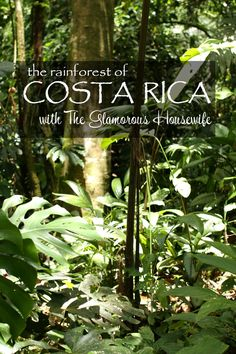 The Rainforest of Costa Rica