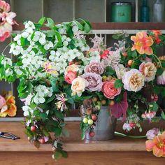 flowers.quenalbertini: Ana Rosa