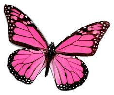 - 24 X Pink Veined Butterfly Edible Cupcake Toppers Cake Rice Paper & Garden Butterfly Kisses, Pink Butterfly, Monarch Butterfly, Butterfly Crafts, Butterfly Outline, Butterfly Sketch, Butterfly Cookies, Butterfly Costume, Butterfly Background