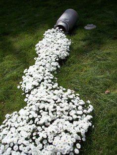 daisy spill...