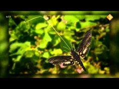 Het Klokhuis: Vlinders