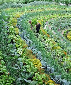 This is a picture of The Eden Project in Cornwall England. This is a polyculture design of permaculture. Conventional farming uses monoculture planting.  This makes the plant more susceptible to pests and disease.