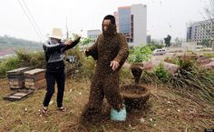 Covering yourself with bees to break a record. Hmmm.