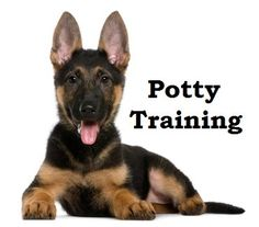 German Shepherd Puppies. How To Potty Train A German Shepherd Puppy. German Shepherd House Training Tips. Housebreaking German Shepherd Puppies Fast & Easy. Share this Pin with anyone needing to potty train a German Shepherd Puppy. Click on this link to watch our FREE world-famous video at ModernPuppies.com