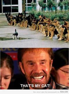 Top 30 chuck norris jokes - Quotes and Humor Chuck Norris Memes, Funny Cats, Funny Animals, Funny Jokes, Hilarious, German Shepherd Dogs, German Shepherds, Funny Photos, Funny Images