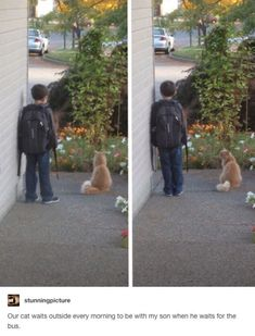 This sweet cat waits with his boy every morning before school. Cute Funny Animals, Funny Cute, Cute Cats, Pretty Cats, Funny Kids, I Love Cats, Crazy Cats, Crazy Cat Lady, Weird Cats