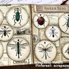 scrapxoxo- entomology stamp set