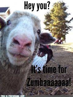 Zumbaaaaaa! ;)