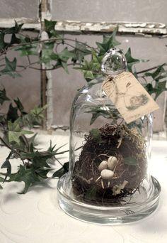 Nest Cloche  glass clochebird by mothsandrustshop on Etsy