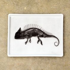 Fab.com | Chameleon X-Ray Tray Small