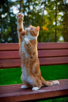 "cybergata: "" Kitteh is reaching for the sky. ""   8:28am Sun 06-sep-2015 º14-Montevideostrasse k/semberg-Argentine"