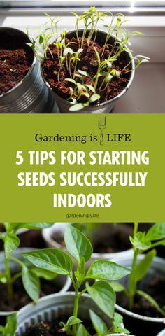 20 Best Growing Vegetables Images Growing Vegetables Vegetables