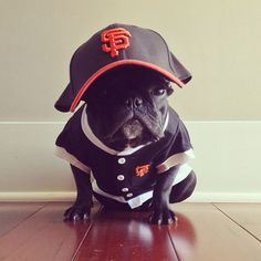 """""""Trotter – A Dog With Swagger"""" – by Sonya Yu"""