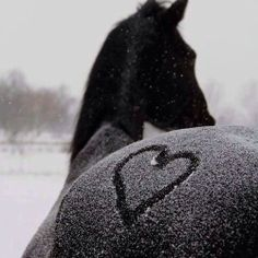 ♥ love your snowy horse butt