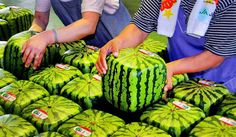 In Japan they have square watermelons.    Growing them inside square glass cases gives them the unique shape. The main reason is so they can fit easily into an overcrowded refrigerator, and you can stack things on them.