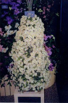 Joe masses of smaller flowers