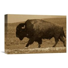 Global Gallery American Bison Male Durham Ranch Wyoming - Sepia Wall Art - GCS-453716-1218-142