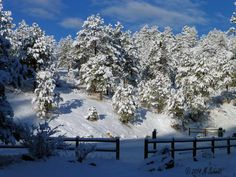 Fresh Evergreen Snow 09March2014 by MSchmidtPhotography.deviantart.com on @deviantART