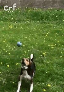 Totally shiloh Lifes ruff, get a dog (45 photos)