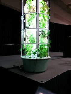 Tower Garden with grow lights