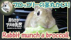 ブロッコリーの茎丸かじり【ウサギのだいだい 】 2016年7月21日