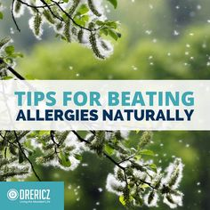 The allergy puzzle is not easily solved, but by helping the body's immune system we can give it the tools it needs to beat allergies naturally! Explore traditional and modern treatments and remedies. Natural Asthma Remedies, Holistic Remedies, Cold Remedies, Health Remedies, Herbal Remedies, Asthma Relief, Asthma Symptoms, Sinus Allergies