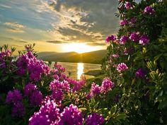 Sonnenaufgang mit Blumen