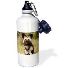 3dRose African Wild Dog in captivity, Harnas Wildlife Foundation, Namibia., Sports Water Bottle, 21oz
