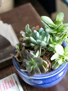 Succulents - Houseplants 101: Choosing the Right Indoor Greenery on HGTV