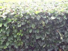 Muro verde Noruega