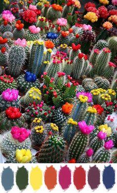 colorful cacti Obrigado A estes amigos assíduos do Pinterest por proporcionar tal satisfação, isto faz a boa permanência com muita satisfação.!.