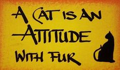 I love cats that have attitude :) Crazy Cat Lady, Crazy Cats, I Love Cats, Cool Cats, Amor Animal, Cat Signs, Here Kitty Kitty, Kitty Cats, Siamese Cats