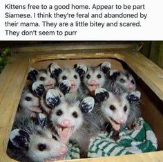 Baby Animals Pictures, Funny Animal Pictures, Cute Baby Animals, Animals And Pets, Funny Animals, Beautiful Creatures, Animals Beautiful, Baby Opossum, Tier Fotos