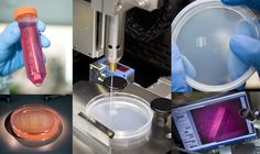 A layer of muscle cells are printed onto a petri dish creating uniform working muscle tissue!