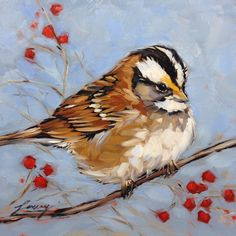 "Sparrow, White throated Sparrow, bird paintings, 6x6"" original oil painting on panel"