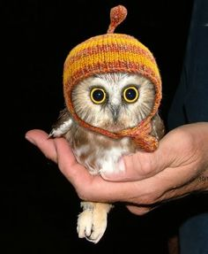 Hipster Owl only wears the cap in summer to be ironic
