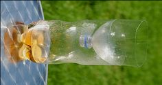 Bee safe wasp trap. How to make your own wasp trap for free « Completegarden's Weblog