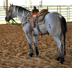 Wyo Roan Advantage 2004 Grullo Roan Stallion by Bonny Blues out of Wyo Advantage. 5 panel N/N by tonya Pretty Horses, Horse Love, Beautiful Horses, Animals Beautiful, Quarter Horses, American Quarter Horse, Barrel Racing Horses, Barrel Horse, Barrel Racing Saddles