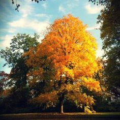 Inspirational Outono na Alemanha Herrenh user Garten Hannover