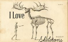 I Love Skeletons (and where to find electronic skeletal samples)