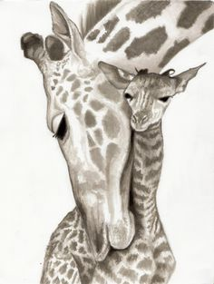 Images For > Drawing Of A Giraffe Head
