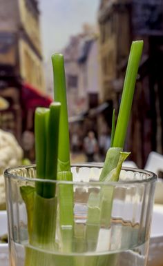 "When you read things like... ""Never buy green onions/scallions again"". As I tend to use this vegetable for dishes, it caught my attention. It's so simple as all it involves is putting green onion/scallion that has been used (with part of the white still on the vegetable) in a glass of water and that's it. For something so simple, I had to try it. One week later and you can see where I made the cut and how much of the green onion has grown back in seven days. Just clip what you need for your…"