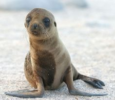 Hundreds of starving sea lion pups have washed ashore on the California coast--all the way from San Diego to Santa Barbara.