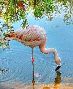 Flamingo... xx