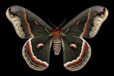 Ночные бабочки фотографа Джимми де Ривьер. Обсуждение на LiveInternet - Российский Сервис Онлайн-Дневников