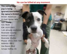 HE CAN BE KILLED AT ANY MOMENT  ... CAN YOU BELIEVE THIS ? ......... please  HELP !!