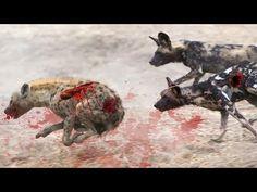 MOST AMAZING WILD ANIMALS ATTACK - Wild Dogs Vs Hyenas