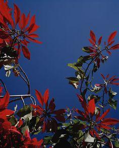 24kblk:  from the series, flamboya by vivanne sassen. 2010.